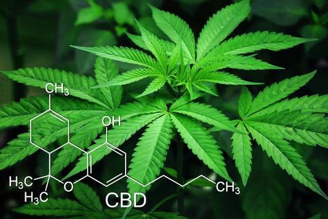 CBD Plant and molecular formula for CBD