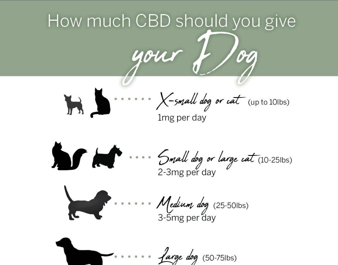 CBD Dosing for Animals
