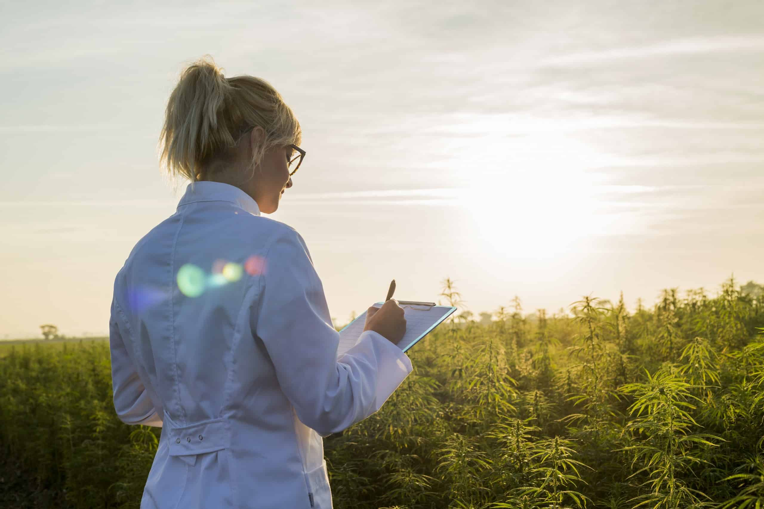 CBD Scientist in a Field of Hemp